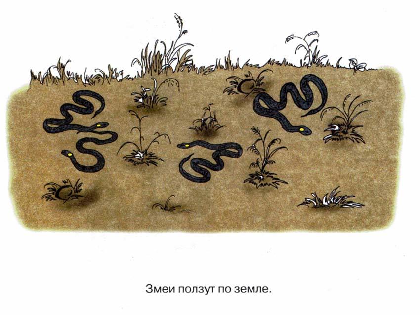 картинный материал для закрепления звукопроизношения - змеи
