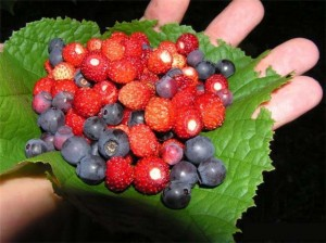тема лес ягоды конспект занятия по грамоте