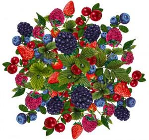 конспект занятия на тему ягоды