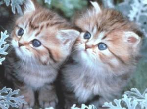 веселые физминутки котята