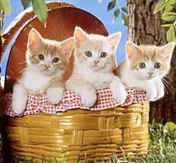 физминутки для дошкольников котята