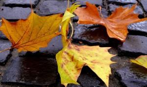 физминутки в стихах листья