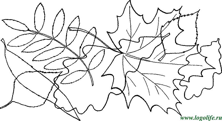 лексическая тема деревья