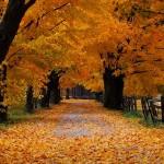 Конспект фронтального занятия по лексической теме  «Осень. Деревья»