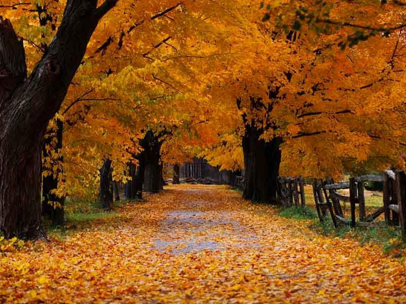 занятие на тему осень, лексическая тема Осень