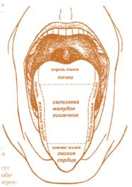 массаж схема языка