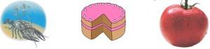 обследование звукопроизношения картинный материал рак торт помидор