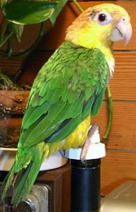 занятия физкультминутки попугай