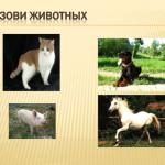 Презентация Домашние животные
