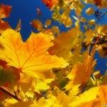 Домашнее задание для родителей тема Осень