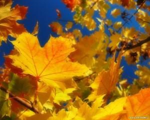 логопедическое задание для родителей по теме осень деревья