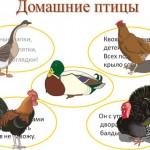 Конспект занятия Домашние птицы
